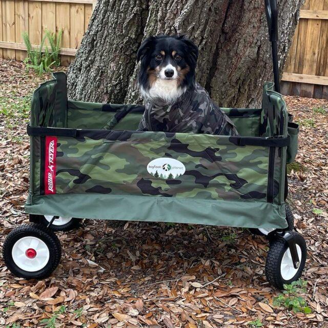 Aug Dog the Bigfoot Hunter!!